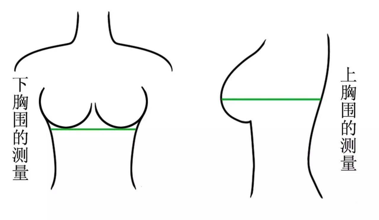 怎么样测量胸围?一起来看看正确的测量
